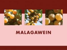 Malaga-Wein 2,5l